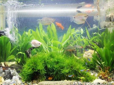 店铺鱼缸摆放位置风水图,店铺最佳摆放鱼缸风水,风水命理,爱情