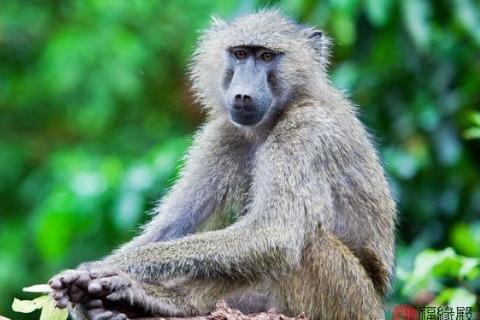 1992年属猴女2022年运势及运程,30岁属猴人2022年的每月运势女性,生肖属相,猴