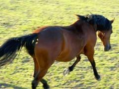 属马出生什么时辰有好命