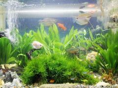 店铺鱼缸摆放位置风水图,店铺最佳摆放鱼缸风水