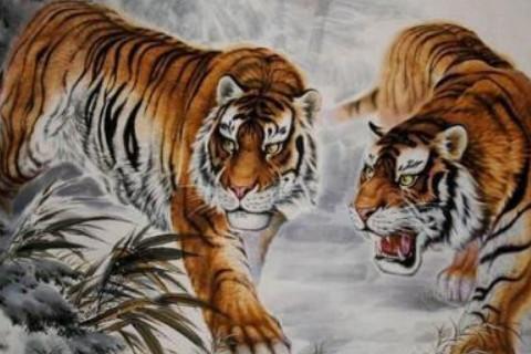 男属虎与什么属相最好,生肖属相,虎