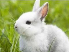 在恋爱中属兔男生会有怎样的心理活动