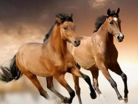 不同季节出生的属马有不一样的个性特点,生肖属相,马