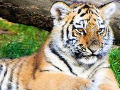 2022年犯太岁的有几个,虎蛇猴必占其中