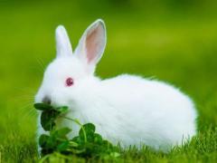 属兔想要寻找真爱需要注意哪方面的问题