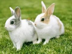怎么追求属兔的女孩,追求属兔女生的技巧
