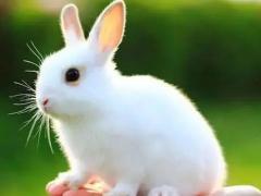 99年出生的属兔的男命2022虎年运气完整版