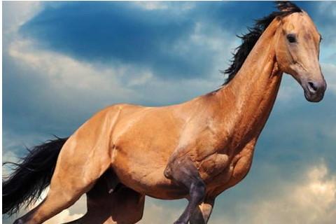 男属马与什么属相最好,生肖属相,马
