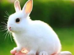 属兔出生什么时辰有好命