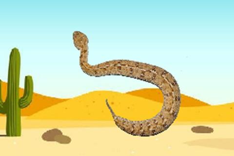 属蛇女喜欢什么样的男人,生肖属相,蛇