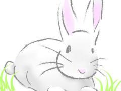不同季节出生的属兔有不一样的个性特点