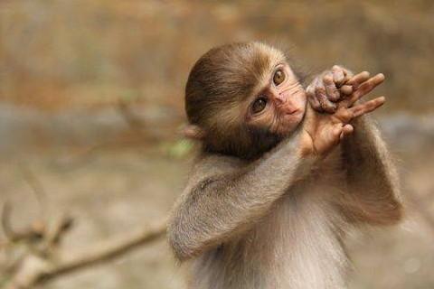 男属猴与什么属相最好,生肖属相,猴