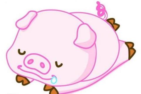 属猪女喜欢什么样的男人,生肖属相,猪