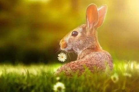 男属兔与什么属相最好,生肖属相,兔